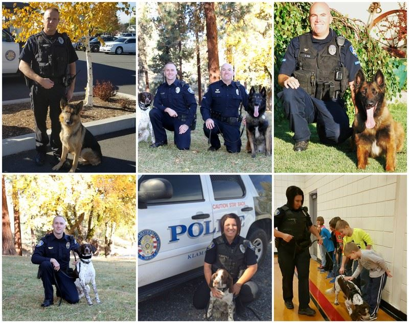 Canine Unit Collage
