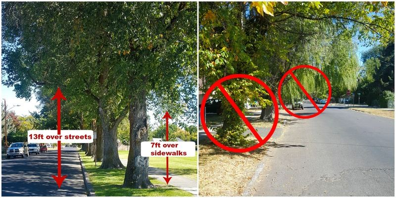 Examples of proper and improper tree maintenance (JPG) Opens in new window